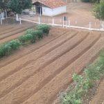 Visita técnica a Fazenda Experimental da FACTU